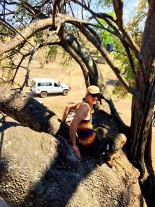 Panu apinanleipäpuussa, Mikumi