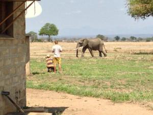 Tuomas, panu ja elefantti