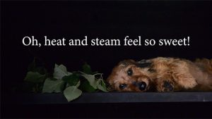 READing Dog Sylvi in smoke sauna